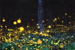 hotaru matsuri (firefly festival, japan)