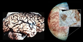 the human brain and one of the moons of Jupiter